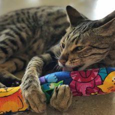 Kitty Kick Stix – Django Licking