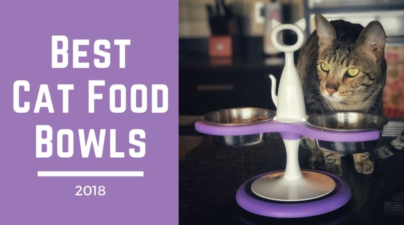 Best Cat Food Bowls Of 2018 Kitty Loaf