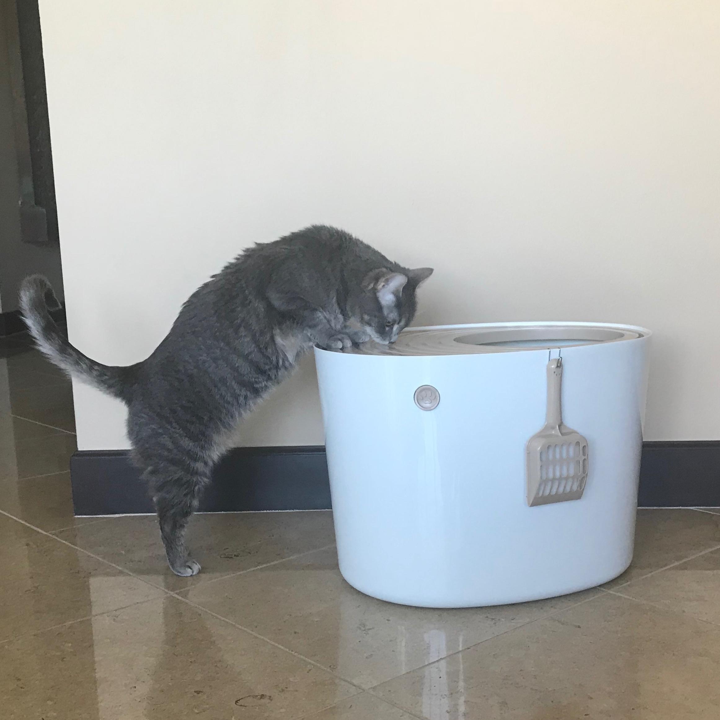rv cat enclosure