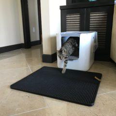 Modkat XL Litter Box – Arya Inside