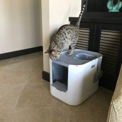 Modkat XL Litter Box – Arya on Top 2
