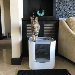 Modkat XL Litter Box – Arya on Top