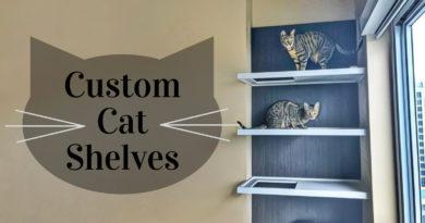 Custom Cat Shelves