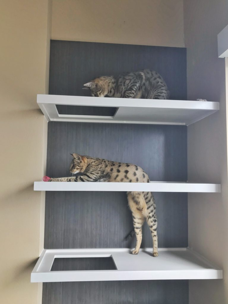 Custom Cat Shelves | Kitty Loaf