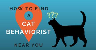 How to Find a Cat Behaviorist Near You