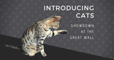 Introducing Cats – Showdown at the Great Wall