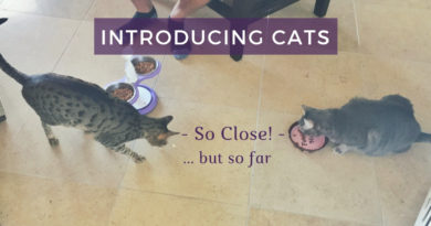 Introducing Cats – So Close But So Far