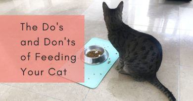 The Do's and Don'ts of Feeding Your Cat